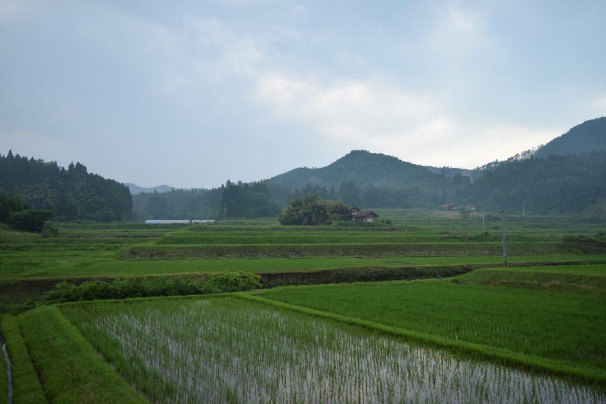 写真2:川本町の田園