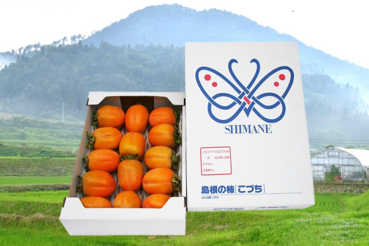 写真1:【島根県川本町産】西条柿進物用(5kg)