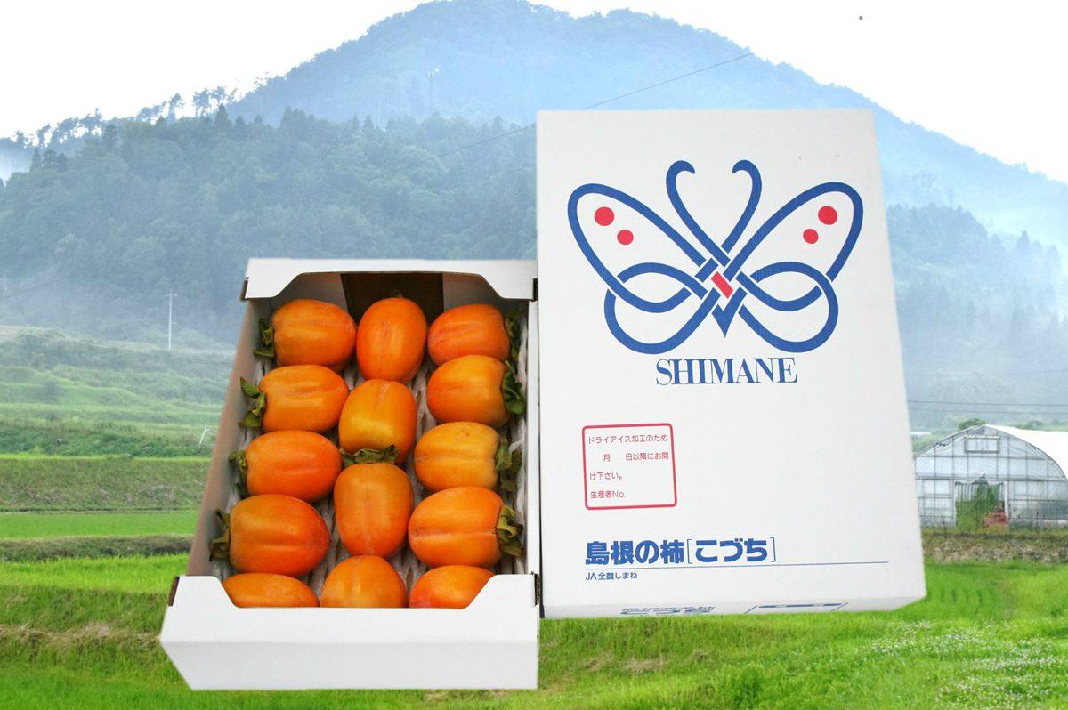 写真1:【島根県川本町産】西条柿進物用(2.5kg)
